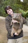 wombat;woman-holding-wombat;person-holding-wombat;carrumbin-wildlife-sanctuary;wombat-with-carer;wombat-with-wildlife-carer;wildlife-care