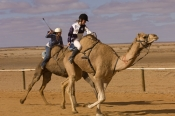camel;dromedary-camel;camelus-dromedarius;camel-race;girls-riding-camels;camel-jockeys;one-humped-camel;one-humped-camel;marree-camel-races;camel-races;australian-camel-races;outback-camel-races