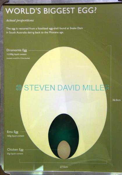 dromornis egg;museum of central australia
