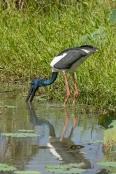bird-fishing