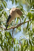 heron-hunting