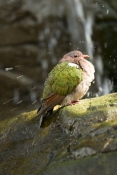 bird-bathing;green-bird;green-winged-bird