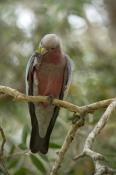 bird-eating;bird-using-claw