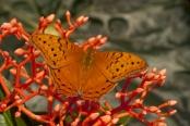 orange-butterfly;orange-on-red