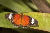 butterfly-shadow;orange-butterfly