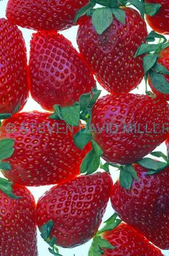 strawberry picture;strawberry;fragaria;ananassa;red fruit;strawberries;bright red
