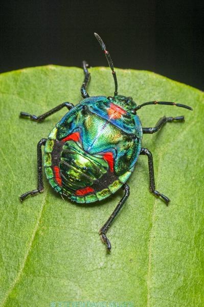 shiny bug;metalic bug;colorful bug;colourful bug