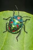 shiny-bug;metalic-bug;colorful-bug;colourful-bug