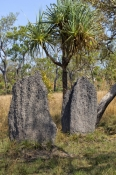 magnetic-termite-mound-picture;magnetic-termite-mound;magnetic-termite-mounds;amitermes-meridionalis;litchfield-national-park;northern-territory;australian-termite-mound;steven-david-miller;northern-territory