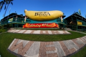 the-big-banana;big-banana-picture;big-banana;coffs-harbour;new-south-wales;banana-statue;steven-david-miller;natural-wanders