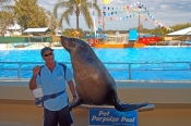 pet-porpoise-pool-picture;pet-porpoise-pool;dolphin-marine-magic;coffs-harbour;new-south-wales;australian-sea-lion-performing;neophoca-cinerea;captive-sea-lion;rescued;sea-lion;sea-lion-in-captivity;steven-david-miller;natural-wanders