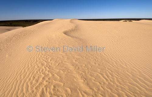 mungo national park picture;mungo national park;walls of china;sand dunes;new south wales outback;australian national park;new south wales national park;steven david miller;natural wanders