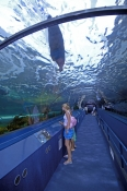 sydney-aquarium;darling-harbour;sydney;sydney-tourist-attractions;oceanarium;steven-david-miller;nat