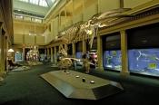 australian-museum;sydney-museum;sydney-natural-history-museum;museum;skeletons;sydney-tourist-attractions;steven-david-miller;natural-wanders