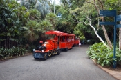 government-house-gardens;royal-botanic-gardens;sydney-botanic-gardens;sydney-botanical-gardens;sydney-royal-botanic-gardens;sydney;sydney-tourist-attractions;new-south-wales;steven-david-miller;natural-wanders;choo-choo-express;red-train-sydney-botanic-gardens
