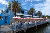 sydney;sydney-tourist-attractions;sydney-fish-market;fish-market;fish;steven-david-miller;natural-wanders