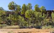 finke-gorge-national-park;palm-valley;northern-territory-national-park;northern-territory;alice-springs;steven-david-miller;natural-wanders;red-cabbage-palm;livistona-mariae-mariae