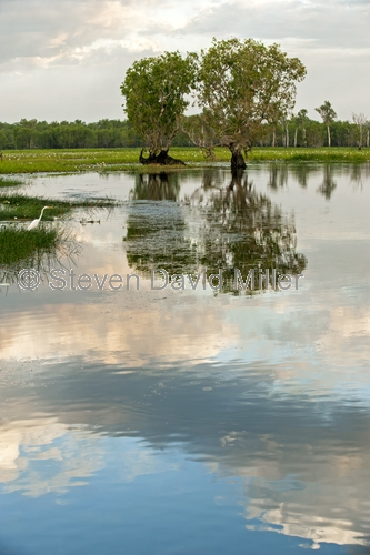 yellow waters;south alligator river;kakadu national park;yellow waters boat trip;kakadu scenery;yellow waters scenery;yellow waters sunset;kakadu sunset;northern territory wetland;top end wetland;australian wetland;river scenery