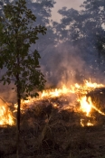 Brush or Bush Fires