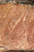 ubirr-rock-art-site;aboriginal-rock-art;kakadu-national-park;kakadu;northern-territory;northern-territory-national-park;rock-art;australian-rock-art;ubirr;fish-in-rock-art;x-ray-rock-art;xray-rock-art