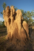 Termites and Termite Mounds