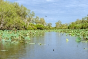 corroboree-billabong;corroboree-billabong-cruise;mary-river;mary-river-wetland;northern-territory-wetland;top-end-wetland;australian-wetland;river-scenery;northern-territory