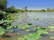 mary-river-national-park;mary-river;rockhole;couzens-lookout;mary-river-wetland;northern-territory-w