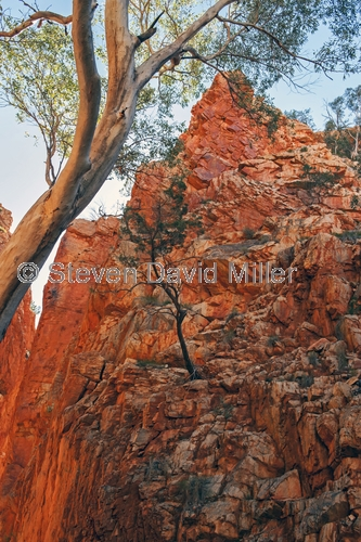 standley chasm picture;standley chasm;standleys chasm;macdonnell ranges;macdonnell ranges national park;alice springs;northern territory;northern territory national park;sandstone gorge;sandstone canyon;australian national park