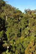 skyrail;skyrail-rainforest-cableway;barron-gorge;barron-gorge-national-park;cairns;queensland;far-north-queensland;rainforest-canopy;tropical-rainforest-canopy