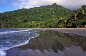 coconut-beach;cape-tribulation;cape-tribulation-beach;daintree-national-park;wet-tropics;wet-tropics-world-heritage-area;world-heritage-area;queensland-national-park;australian-national-park;australian-world-heritage-area
