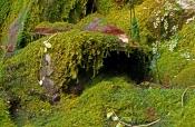 moss-gardens;violet-gorge;carnarvon-gorge;carnarvon-creek;carnarvon-national-park;queensland-nationa