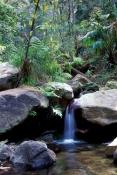 violet-gorge;carnarvon-gorge;carnarvon-creek;carnarvon-national-park;queensland-national-park;australian-national-park;carnarvon-gorge-walk
