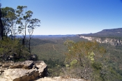 AUSTRALASIA;AUSTRALIA;HABITAT;LANDSCAPES;NP;RESERVE;TREES;TROPICAL;WOODLANDS;consuelo-tableland;carn