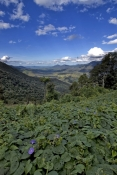 eungella;eungella-valley