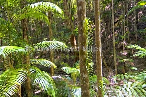 central station;pile valley;wanggoolba creek;fraser island rainforest;fraser island;sand island;fraser island national park;great sandy national park;queensland national park;australian national park;subtropical rainforest