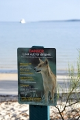 fraser-island;fraser-island-dingo;dingo;fraser-island-dingo-sign;dingo-warning-sign;great-sandy-national-park;queensland-national-park;australian-national-park;fraser-island-national-park