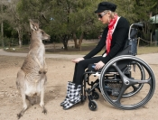 feeding-kangaroo;woman-feeding-kangaroo;woman-in-wheelchair;currumbin-sanctuary;kangaroo-at-currumbin-sanctuary