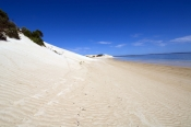 seven-mile-beach;7-mile-beach;coffin-track;coffin-bay-national-park;south-australian-national-park;australian-national-park;tyre-tracks-on-beach;eyre-peninsula