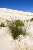 seven-mile-beach;7-mile-beach;coffin-track;coffin-bay-national-park;south-australian-national-park;australian-national-park;plants-on-sand-dunes;plants-stopping-erosion;plants-stabalyzing-sand-dunes;eyre-peninsula