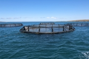 port-lincoln;fish-farming;fish-pens;tuna-farming;aquaculture-eyre-peninsula;south-australia;southern-ocean-fish-pen;tuna-pen