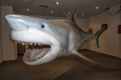 great-white-shark-replica;streaky-bay;streaky-bay-information-centre