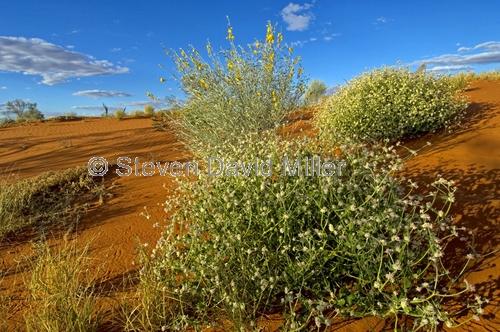 innamincka regional reserve;innamincka;strzelecki track;strzelecki desert;south australia outback track;cordillo downs station