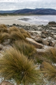 south-bruny-national-park;south-bruny-island;bruny-island;cloudy-bay;cloudy-bay-campground;tasmania;tasmania-national-park;tassie;south-coast-bruny-island