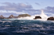 tasman-sea-coastline;southern-ocean-coastline;bruny-island;south-bruny-island;south-bruny-national-park;tasmania;tassie;tasmania-national-park;bruny-island-coastline;bruny-island-cruises;wild-seas;crashing-waves