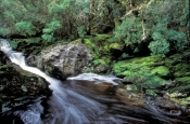 cradle-mountain-lodge;pencil-pine-river;pencil-pine-falls;enchanted-trail;cradle-mountain-lake-st-clair-national-park;cradle-mountain;tasmania;tassie;tasmania-national-park;australian-national-park;alpine-lake-tasmania