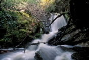 crater-falls;waterfall;tasmania-waterfall;cradle-mountain-lake-st-clair-national-park;cradle-mountain;tasmania;tassie;tasmania-national-park;australian-national-park;alpine-lake-tasmania