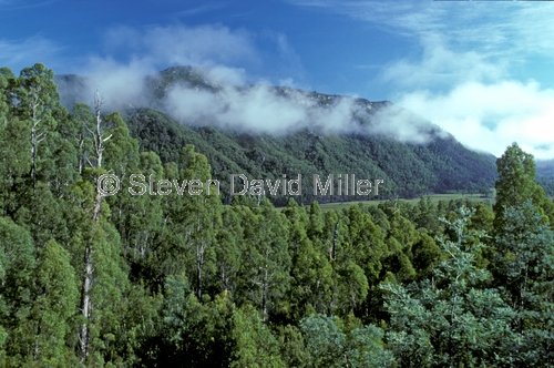 lyell hwy;lyell highway;lyell hwy scenic drive;franklin-gordon wild rivers national park;tasmania world heritage area;tasmania;tassie