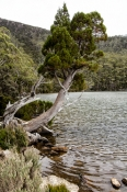 lake-dobson;lake-dobson-road;mount-field-national-park;mt-field-national-park;tasmania;tassie;tasmanian-national-park;australian-national-park;alpine-lake;mosaic-forest