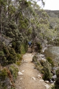 lake-dobson;lake-dobson-road;mount-field-national-park;mt-field-national-park;tasmania;tassie;tasman