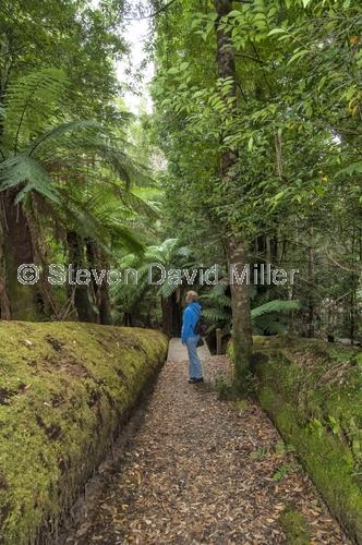 styx forest;styx forest drive;styx big tree reserve;forestry tasmania;forestry tasmania drives;forestry tasmania reserves;southwest tasmania;tasmania;tassie;temperate rainforest